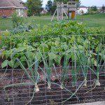 Adventures in Gardening: A Baby Food Garden