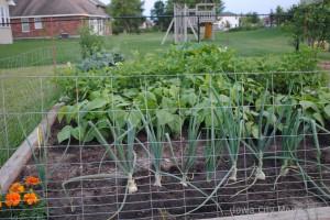 lana garden