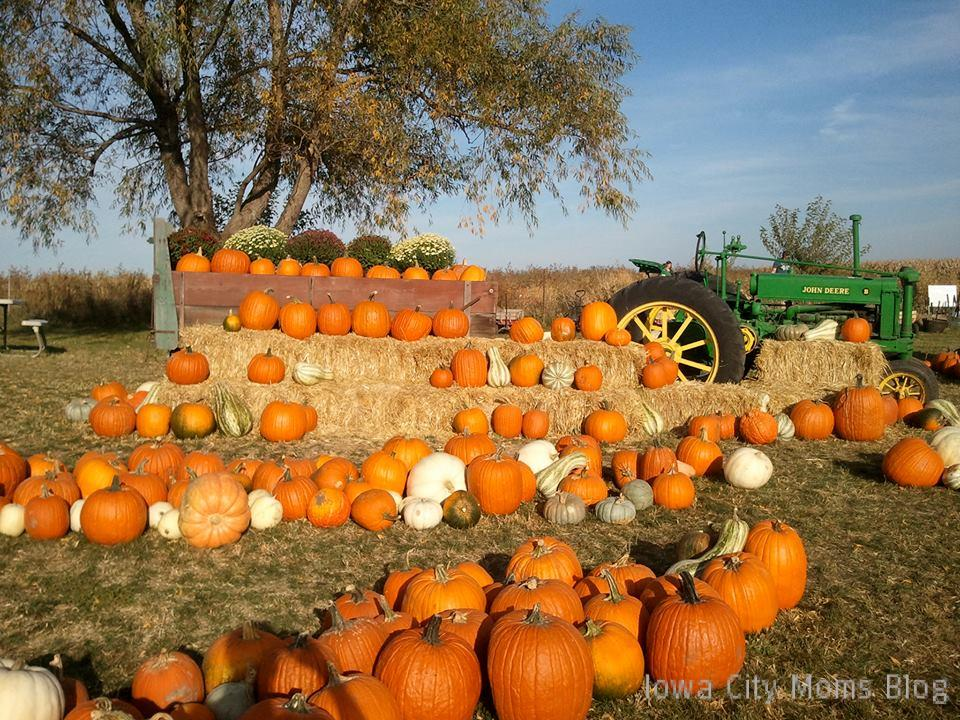 pumpkin patch ideas