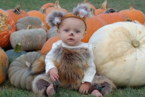 guide to orchards and pumpkin patches featured