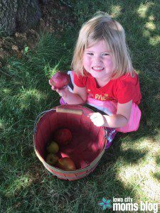 Apple Orchard Apple Picking