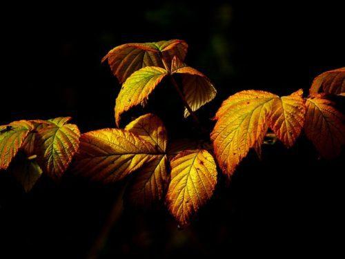 autumn-437769_640
