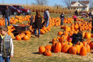 pumpkin-995416_640