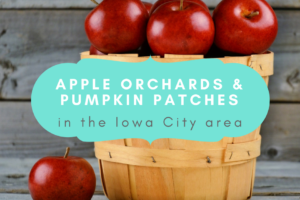 Apple Orchards & pumpkin patches
