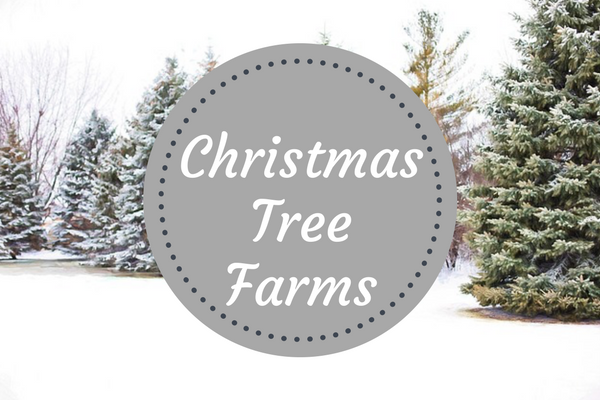 Where to find a christmas tree near iowa city