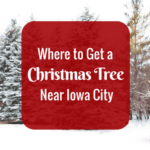 Where to Get a Christmas Tree in the Iowa City Area