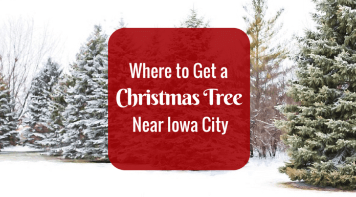 where to get a christmas tree near Iowa City: Christmas Tree Farms and stores