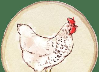 chicken meals recipes