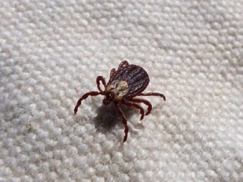 My Daughter Got Bitten by a Tick, and It Sucked: Lyme Disease Prevention and Awareness