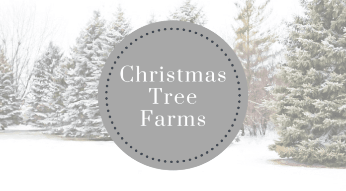 Christmas tree farms near Iowa City