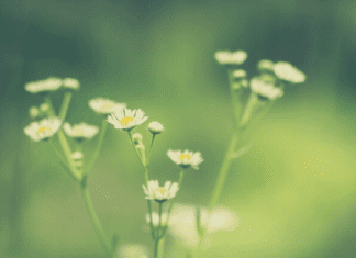 an image of ordinary flowers