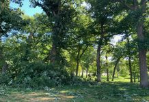 Tree damage at Upper City Park in Iowa City.