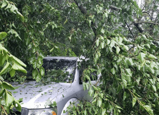 A tree on a car following the derecho storm in Iowa.