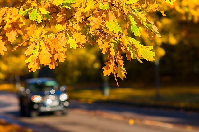 A car driving to view fall foliage