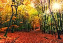 image: fall leaves: where to see fall foliage in the Iowa CIty area