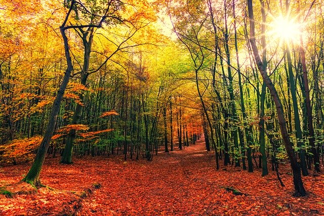 A forest view of fall foliage