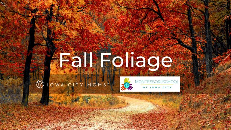 Where to View Colorful Fall Foliage Near Iowa City