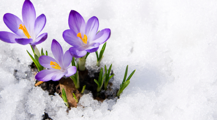 Signs of Spring Scavenger Hunt Printable